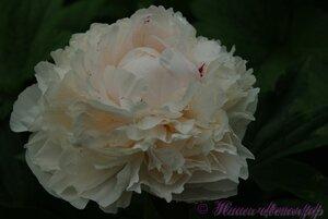 Мы любим цветы - Страница 3 0_9df17_f253ec5_M