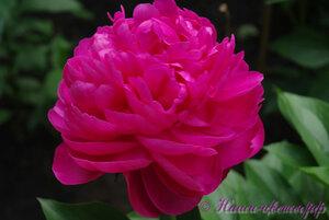 Мы любим цветы - Страница 3 0_9db9f_b6682882_M