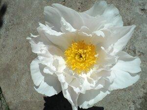 Колорлайн, розы 2013. 0_6ad5d_8858aa2f_M