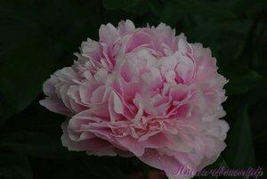 Мы любим цветы - Страница 3 0_9df18_9fad63e9_M