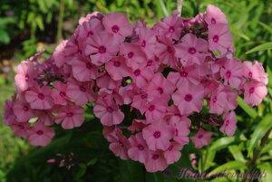 Мы любим цветы - Страница 3 0_a225c_2e613f16_M