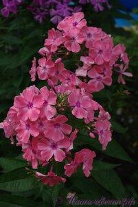Мы любим цветы - Страница 3 0_a2255_52486979_M