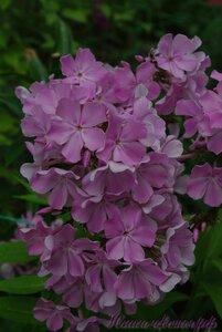 Мы любим цветы - Страница 3 0_a2256_3bc5832f_M