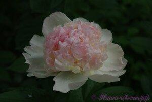 Мы любим цветы - Страница 3 0_9df14_13744b42_M