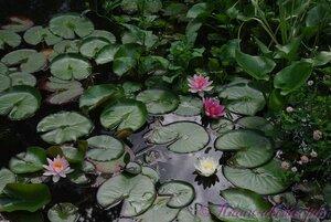 Мы любим цветы - Страница 3 0_9dfa9_e489483_M