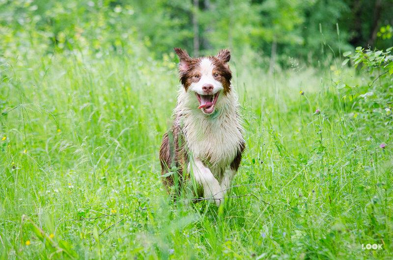 Мои собаки: Зена и Шива и их друзья весты - Страница 5 0_a0409_6d6b941f_XL