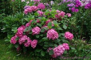 Мы любим цветы - Страница 3 0_a2245_e702397e_M
