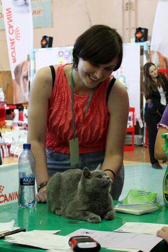 """Международная выставка кошек """"Удивительные кошки"""", 5-6 октября 2013, г. Сургут, ХМАО - Страница 2 0_ddb72_2ff16716_L"""