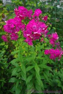 Мы любим цветы - Страница 3 0_a225b_2294e2d9_M