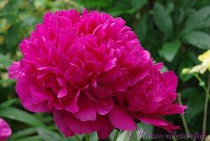 Мы любим цветы - Страница 3 0_9df19_1af66390_M