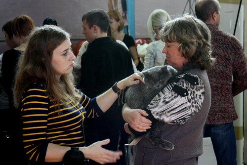 """Международная выставка кошек """"Удивительные кошки"""", 5-6 октября 2013, г. Сургут, ХМАО - Страница 2 0_ddb6c_95a036b9_L"""
