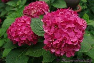 Мы любим цветы - Страница 3 0_a2244_39168851_M
