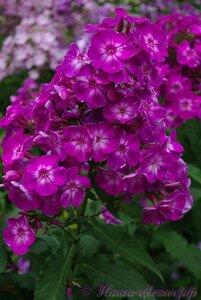 Мы любим цветы - Страница 3 0_a225a_804e615_M