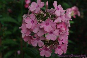 Мы любим цветы - Страница 3 0_a2249_ac76c587_M