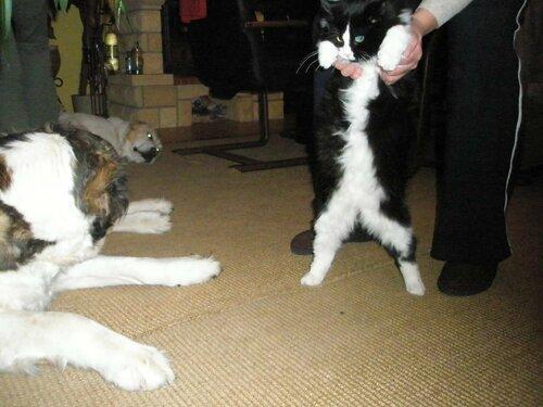 аусси и кошка - Страница 4 0_1459cb_c50acea4_L