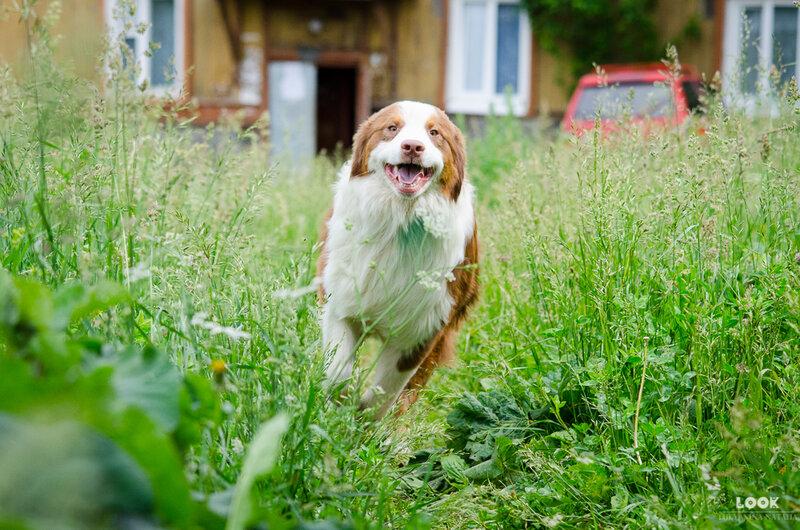 Мои собаки: Зена и Шива и их друзья весты - Страница 5 0_a03a4_39eabd4_XL