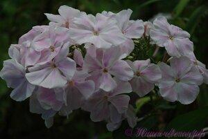 Мы любим цветы - Страница 3 0_a2254_12316bc2_M