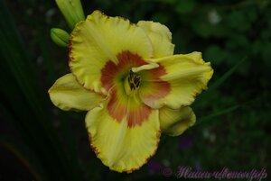 Мы любим цветы - Страница 3 0_a2247_ce2518c3_M