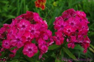 Мы любим цветы - Страница 3 0_a2251_b1ee82fc_M