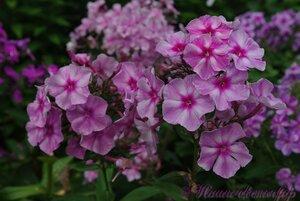 Мы любим цветы - Страница 3 0_a224f_4c160b4a_M