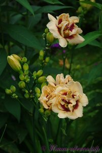 Мы любим цветы - Страница 3 0_a224a_a397125b_M