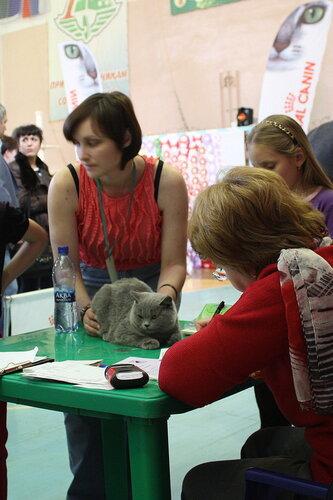 """Международная выставка кошек """"Удивительные кошки"""", 5-6 октября 2013, г. Сургут, ХМАО - Страница 2 0_ddb71_c62f477b_L"""