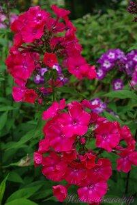 Мы любим цветы - Страница 3 0_a2257_33476da7_M
