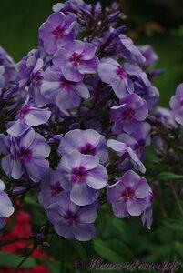 Мы любим цветы - Страница 3 0_a2252_f3bc9e0b_M