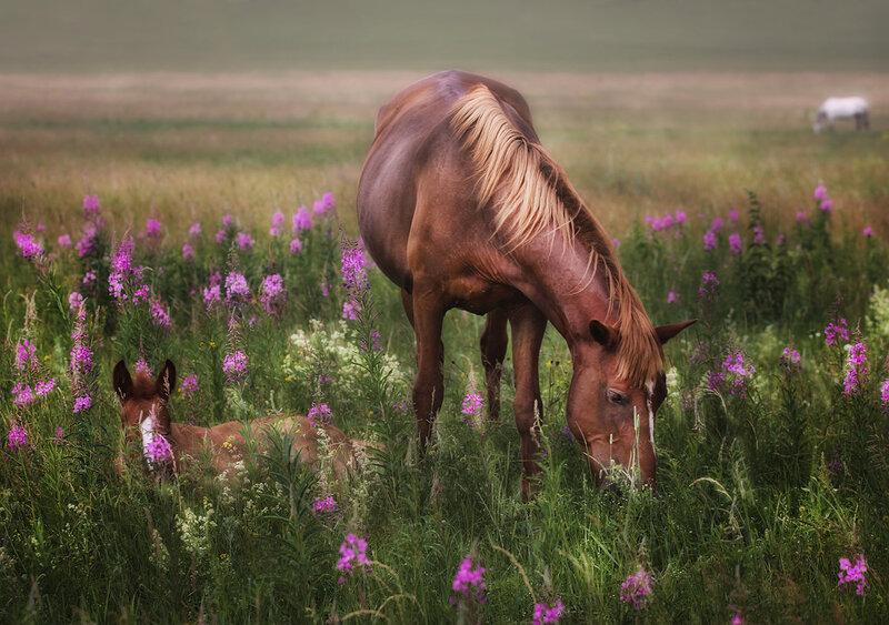 Обожаю лошадей!   0_fd978_1d6343f9_XL