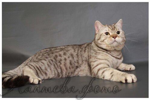 Каталог вяжущих котов 0_e091d_f97d5834_L
