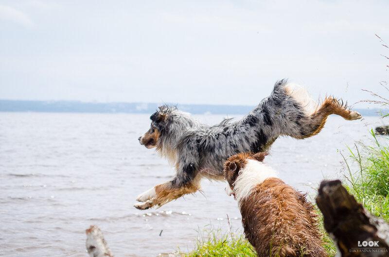 Мои собаки: Зена и Шива и их друзья весты - Страница 4 0_a03fe_f96c86_XL