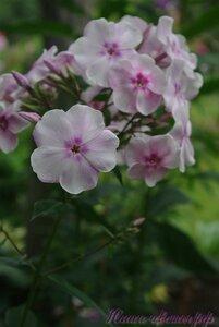 Мы любим цветы - Страница 3 0_a2259_3f7e4bca_M