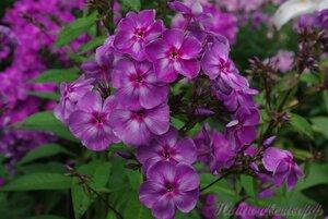 Мы любим цветы - Страница 3 0_a2253_133d7bb6_M