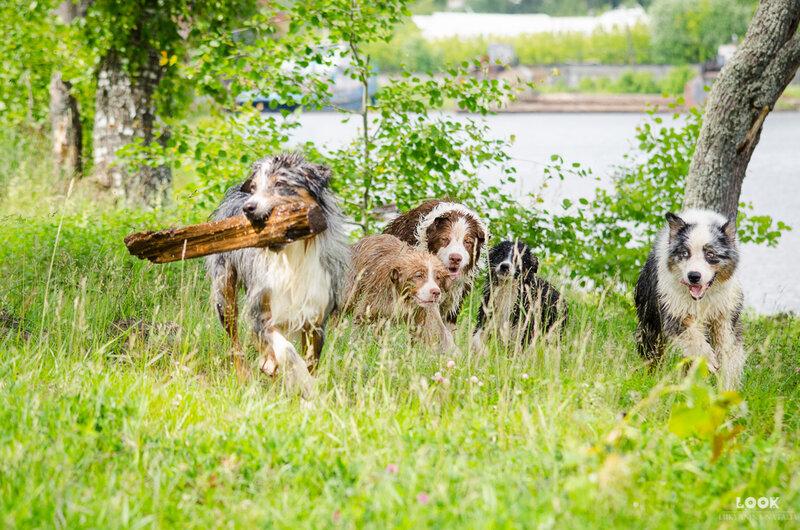 Мои собаки: Зена и Шива и их друзья весты - Страница 4 0_a0402_ca7e97ac_XL