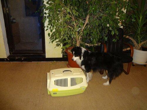 аусси и кошка - Страница 4 0_1459c9_9c2363b2_L