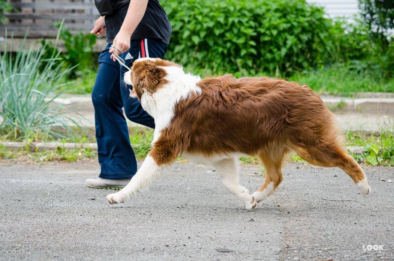 Мои собаки: Зена и Шива и их друзья весты - Страница 5 0_a039b_bdc42a2_XL
