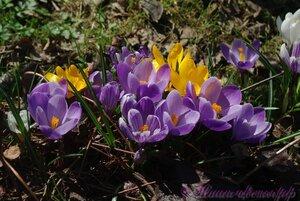 Мы любим цветы - Страница 4 0_aef47_e3459436_M