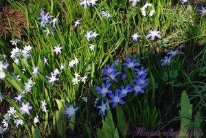 Мы любим цветы - Страница 4 0_aef4b_699ef0a_M