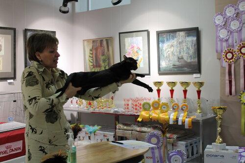 """Международная выставка кошек AFC """"Удивительные лесные кошки"""", 1 марта 2014 г. Сургут - Страница 2 0_e4803_2ab56604_L"""