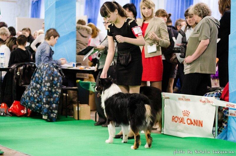 Выставочные успехи наших собак - 5 - Страница 6 0_99b33_9ea261c_XL