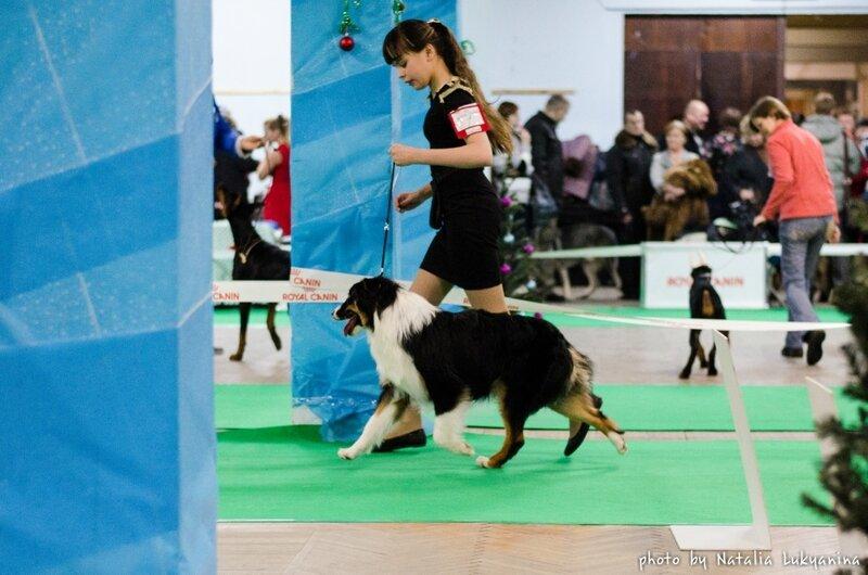 Выставочные успехи наших собак - 5 - Страница 6 0_99b34_7f93c843_XL