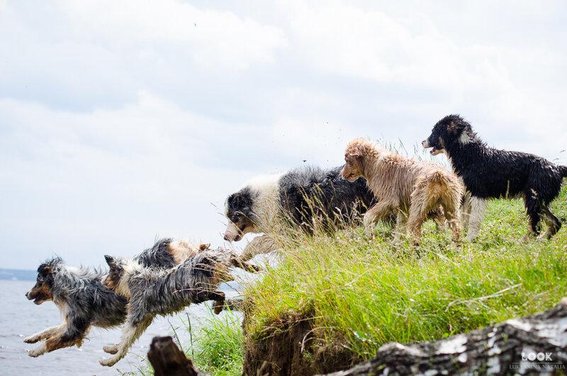 Мои собаки: Зена и Шива и их друзья весты - Страница 4 0_a0400_a09b6edc_XL