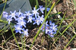 Весна идёт... - Страница 2 0_107c28_41a98ba3_M