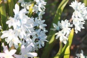 Весна идёт... - Страница 2 0_107c2b_bcddba5a_M