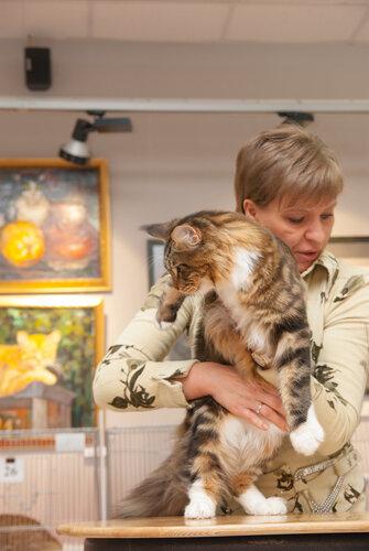 """Международная выставка кошек AFC """"Удивительные лесные кошки"""", 1 марта 2014 г. Сургут - Страница 2 0_b26d4_183837a3_L"""