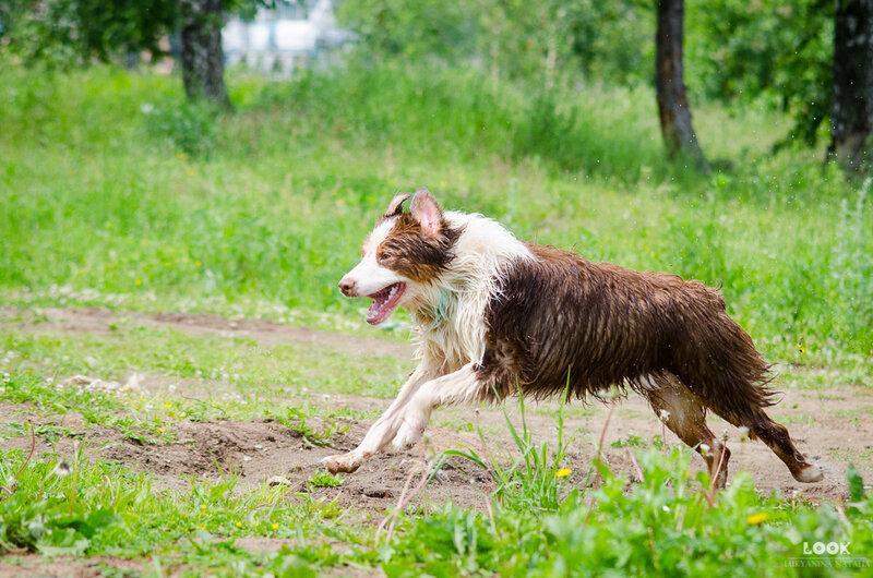 Мои собаки: Зена и Шива и их друзья весты - Страница 5 0_a0404_393d7133_XL