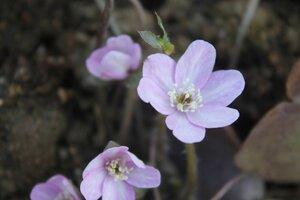 Весна идёт... - Страница 2 0_107c14_c10e65ec_M
