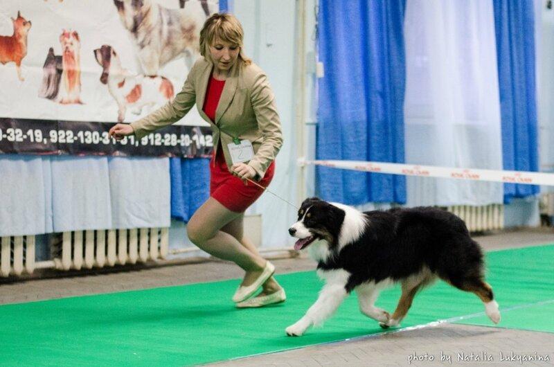 Выставочные успехи наших собак - 5 - Страница 6 0_99b36_a90a2a4e_XL