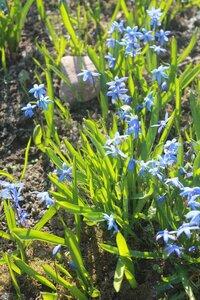 Весна идёт... - Страница 2 0_107c26_aa2e856f_M