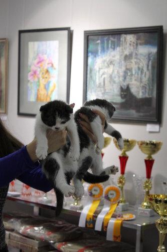 """Международная выставка кошек AFC """"Удивительные лесные кошки"""", 1 марта 2014 г. Сургут - Страница 2 0_e4998_a0769bd6_L"""